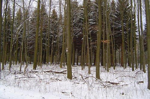 geschichten winter vor 100 jahren